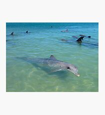 Dolphins Galore Photographic Print