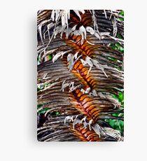 Northern Territory  Pandanus Tree  Canvas Print