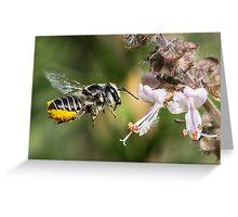 Leaf Cutter Bee Greeting Card