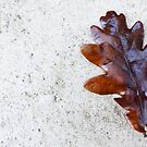 Oak Leaf by Michelle Ordever