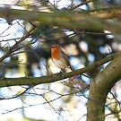 Robin in the Tree by Michelle Ordever