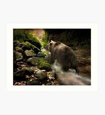 Bear Creek Art Print