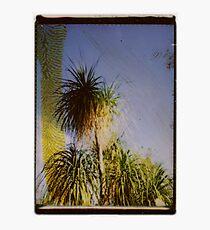 tropic Photographic Print