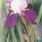 Suffragette Iris by Jacki Stokes