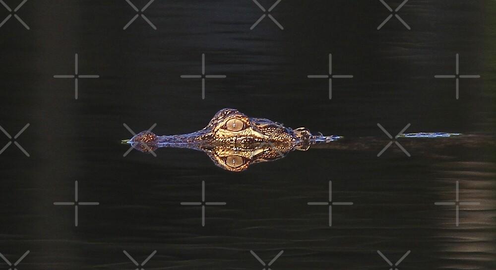 Gator Done - Alligator by Jim Cumming