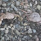Crabs by Colin Bentham