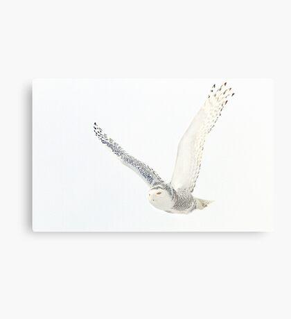 Afternoon Flight - Snowy Owl Canvas Print