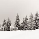 Winter colors by Marcel Ilie