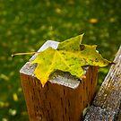 Fall is Falling by Richard Bozarth
