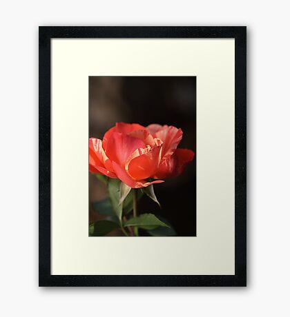 A Warm Glow Framed Print