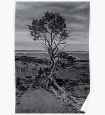 Lone Mangrove, Western Port Bay Poster
