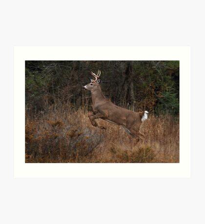 Early Morning Buck - White-tailed Deer Art Print