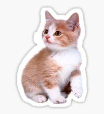 Kitten! Sale!!! Sticker