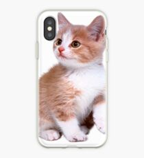 Kitten! Sale!!! iPhone Case