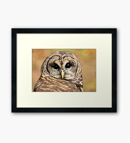 Here is looking at you Framed Print