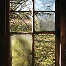 Old Window by shiro