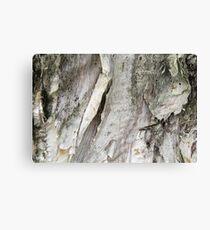 papery bark Canvas Print