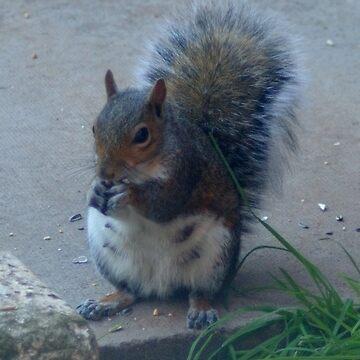 squirrel by Jolie-73