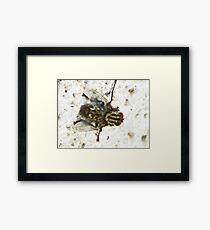 ©NS Close Up Of Fly IA Framed Print