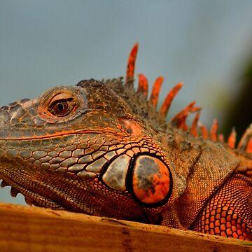 Red Iguana Lizard by Jolie-73