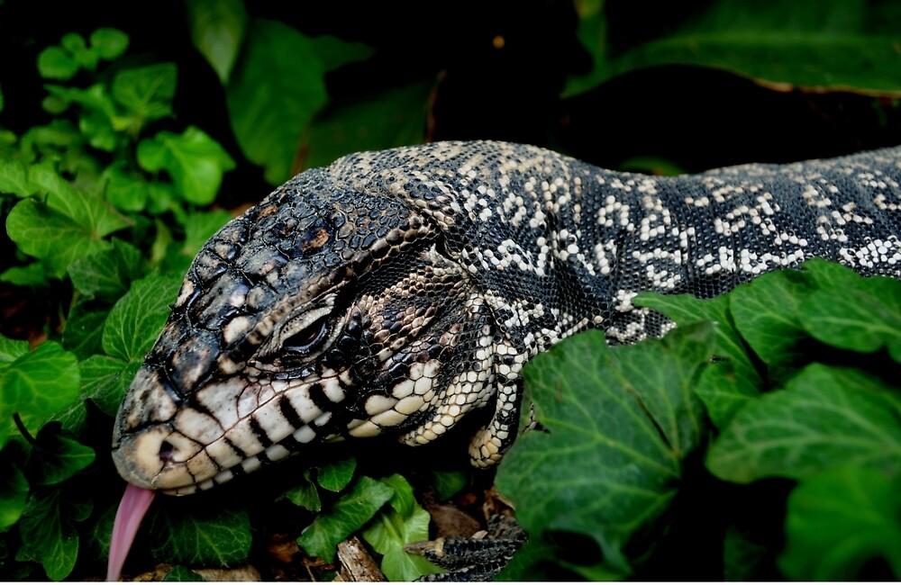 Lizard by Jolie-73