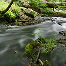 Stream in the Woods by Martina Fagan