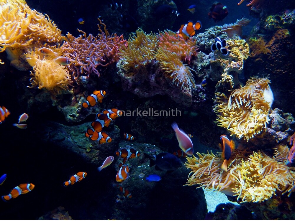 The Quiet Reef by markellsmith