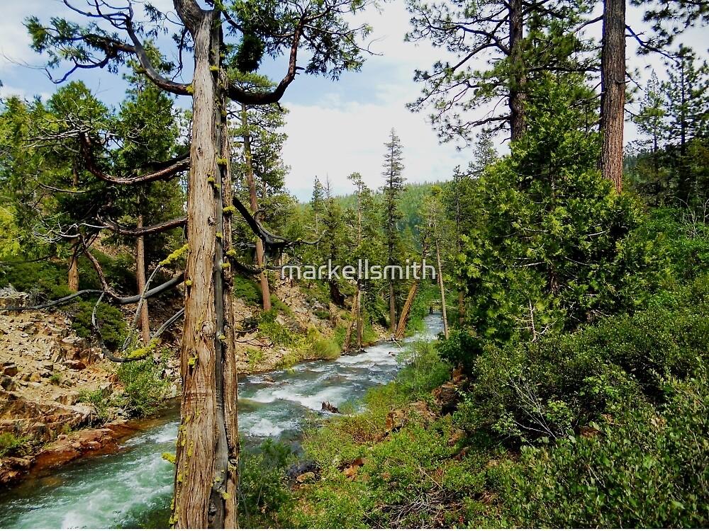 Alpine Creek  by markellsmith