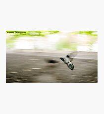 The Flying Bird Photographic Print