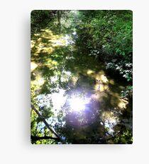 Creek Wood Sun Reflection Canvas Print