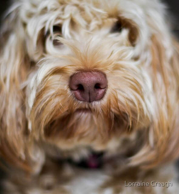 Meet Molly by Lorraine Creagh
