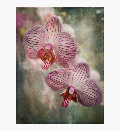 Orchids Fotodruck