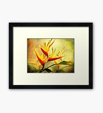 Flames of Paradise Framed Print