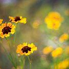 Spring UP by Vulcan Spark Studios