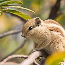 Squirrel by Vulcan Spark Studios
