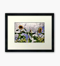 Sunflower Decay Framed Print
