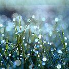 Fairy Drops Aqua Blue by Astrid Ewing Photography