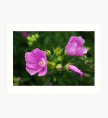 Delightful pink Mallow flowers Art Print