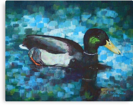 Mallard Duck by John Wallie