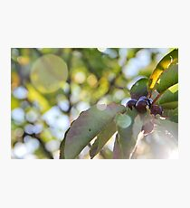 Berries on a Tree Photographic Print