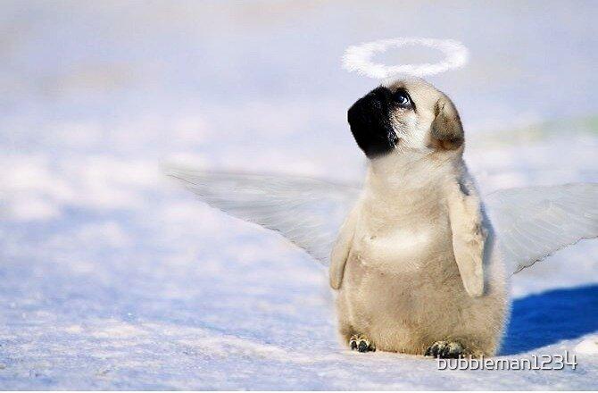 Pug Angel  by bubbleman1234