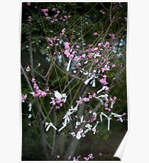 Omikuji blossom tree Poster