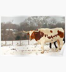 Austin Snowy Longhorn Poster
