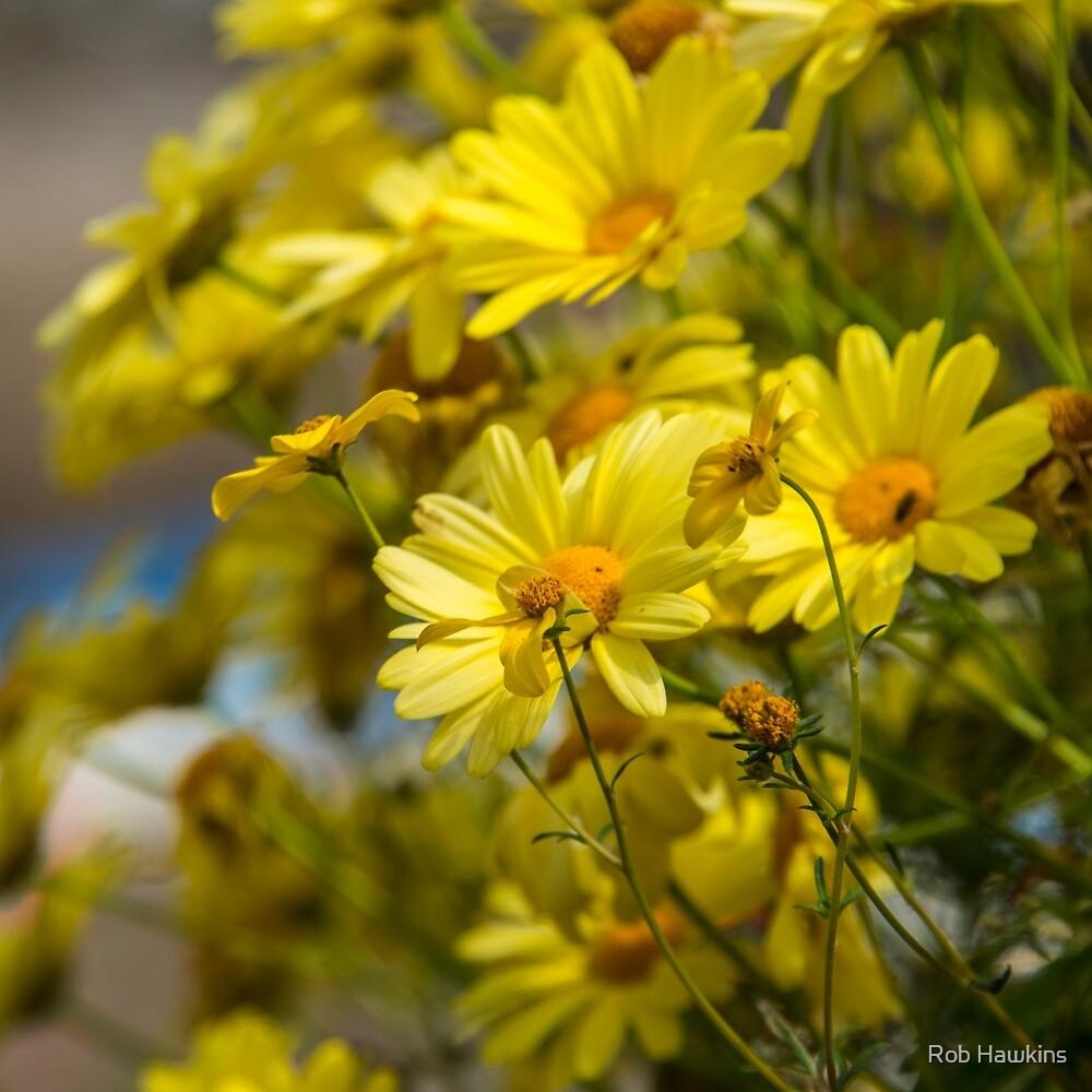 Yellow Daisies  by Rob Hawkins