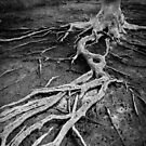 Exposed Roots by John Quixley