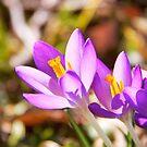 Spring trio by LadyFi
