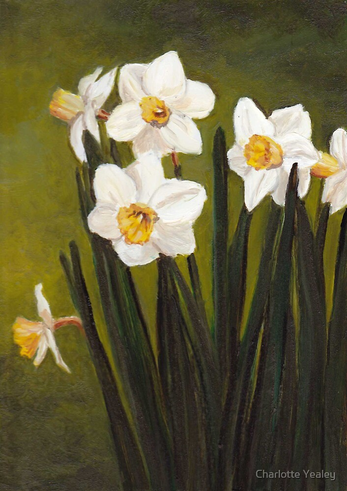 Narcissus by Charlotte Yealey