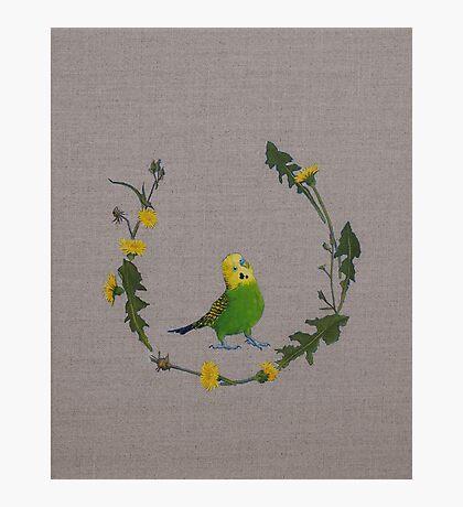 dandy bird Photographic Print