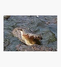Alligator Action Photographic Print