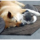 Napping Buddies by Claire McCall